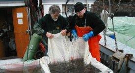 Aquaculture Jobs Section Photo Button