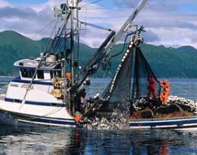 Alaska Salmon Purse Seiner Button