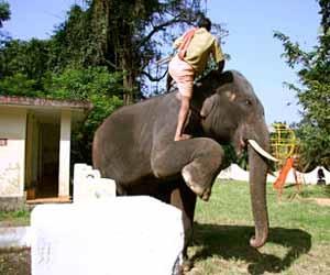 Elephant Trainer Photo
