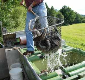Aquaculture Jobs Fish Farming Jobs Hatchery And Salmon