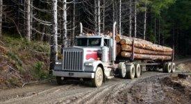 Logging Truck Hauling Logs Photo