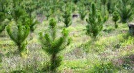 Photo of Tree Farm Button