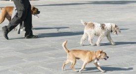 Dog Walker Photo Button