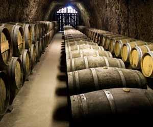 Wine Cellar Barrels Photo