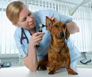 Veterinarian Examining Dog Photo
