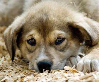 Cute Dog waiting to be Walked Photo
