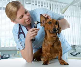 Veterinarian Giving Dog a Medical Exam Photo