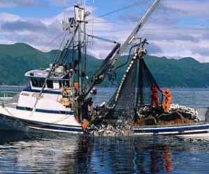 Alaska Salmon Purse Seiner pulling in Net in Southeast Alaska