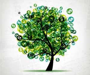 Money Tree Picture