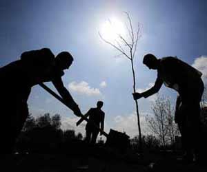 Tree Planing Crew Photo