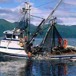 Alaska Fishing Jobs Seafood Industry Employment Jobmonkey